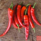 50 Anaheim Chile Pepper seeds,Hot pepper Dragon's tongue,SW14