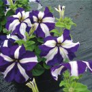 200 Petunia Ultra Blue Star , petunia seeds,Flower Seeds,SW28