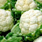 250 Cauliflower seeds , snowball improved,SW29