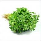 100 Trigonella Caerulea,Fenugreek seeds,Trigonella blue,Mushroom grass,Culinary Herb,SW48