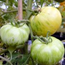20 Tomato White Zebra seeds ,organic seeds, SW80