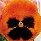 40 Viola Magic seeds,Viola Cornuta,SW82