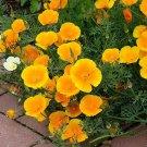 150  Eschscholzia seeds,Eschscholzia Orange,California Poppy seeds,SW90