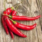 50 Chili pepper Seeds,Capsicam,Hot chili pepper seeds ,SW115