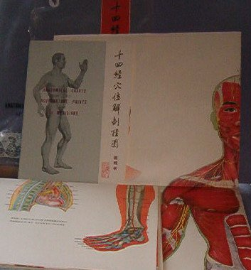 Books - Anatomical Charts of the Acupuncture Points and 14 Meridians - Full Size