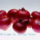 200 Big purple onionr seeds ! Non transgenic, Vegetable seeds