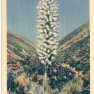 SPANISH BAYONET ARIZONA LINEN POSTCARD #130 UNUSED