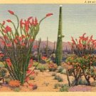 A BIT OF THE DESERT NEW MEXICO LINEN POSTCARD #191 USED 1940s
