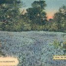 A FIELD OF TEXAS BLUEBONNETS TEXAS - THE LONE STAR STATE LINEN POSTCARD #206 USED 1941