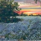 BLUE BONNETS - THE STATE FLOWER OF TEXAS LINEN POSTCARD #207 USED 1945