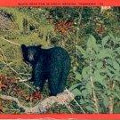 BLACK BEAR CUB IN GREAT SMOKIES TENNESSEE LINEN POSTCARD #217 USED 1947