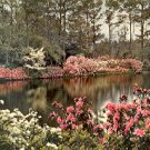 MIRROR LAKE BELLINGRATH GARDENS MOBILE ALABAMA GIANT COLOR PICTURE POSTCARD #517 UNUSED