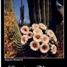 SAGUARO CACTUS FLOWERS - ARIZONA COLOR PICTURE POSTCARD #5 UNUSED MINT