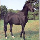 1993 PRINT #06: BLACK STALLION 8 X 10 MINT