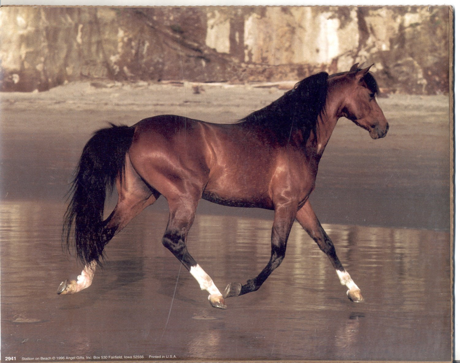 1996 PRINT #01: STALLION ON BEACH 8 X 10 MINT