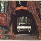 ORIGINAL DRIVE THRU TREE HISTORIC SHRINE TREE - REDWOODS - VINTAGE COLOR POSTCARD UNUSED MINT # 611