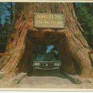 CHANDELIER DRIVE THRU TREE - REDWOODS - VINTAGE COLOR POSTCARD 1984 UNUSED MINT # 612