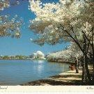 JEFFERSON MEMORIAL & CHERRY TREE BLOSSOMS - VINTAGE ORIGINAL COLOR POSTCARD UNUSED NEAR MINT # 634