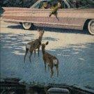 1961 Cadillac  ad (# 362)