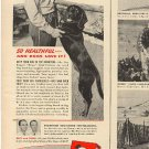 1948 Friskies Dog Food ad  (#  2013)