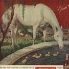 1946  White Horse Whisky ad (# 1085)