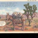 Ten Feet From Hell -  Postcard- (# 72)