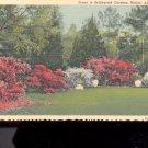 Scene in Bellingrath Gardens, Mobile- Postcard- (# 18)