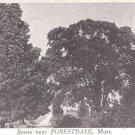 Scene near Forestdale, Mass.   postcard  #2 (#223)