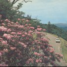 Rhododendron in Full Bloom, Great Smoky Mountains National Park  postcard (#266)