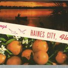 Greetings from Haines City, Florida      Postcard ( # 376)