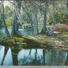 Along Silver River in Silver Springs, Florida     Postcard #2 ( # 379)