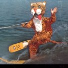 Timmy the Tiger  part of the water ski show Cypress Gardens  Postcard   (# 408)