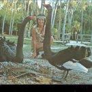 Homosassa Springs, Fla. Australian Black Swans    Postcard   (# 415)