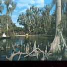 Cypress knees above the waters of Lake Eloise  Cypress Gardens  Postcard (# 418)