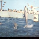 Porpoises leap for food and just for the fun of it!   Postcard (# 420)