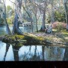 Along Silver River in Silver Springs, Fla.   Postcard (# 425)