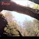 Natural Bridge of Alabama       Postcard (#459)
