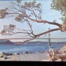 Narrows Bridge- Tacoma, Washington      Postcard (#464)