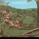 Catawba Rhodedendron lends its beauty to a fence       Postcard  ( # 468)