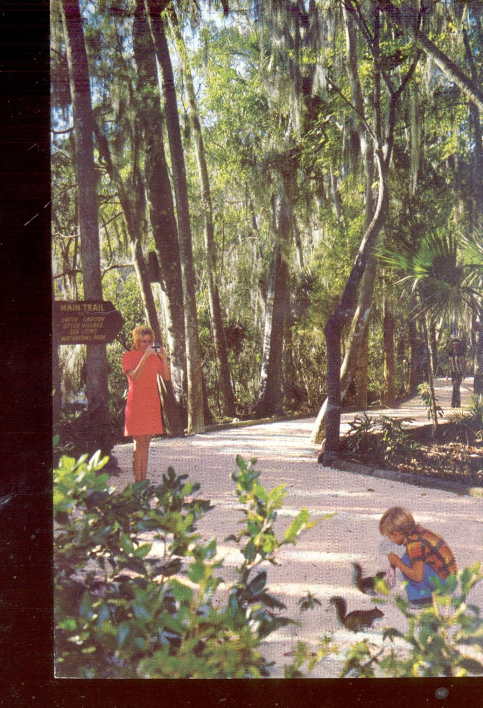 Homosassa Springs, Fla.    Postcard  (# 579)