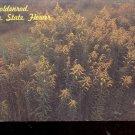 Goldenrod Kentucky State flower    Postcard- (#  600)
