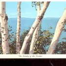 The Beauty of the Birches    Postcard- (# 659)