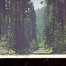 Fir-lined Highways in Washington and Oregon   Postcard     (# 720)