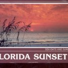 Florida  Sunset- sea oats and sunset   Postcard   (# 736)