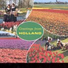 Greetings from Holland  -     Postcard   (# 754)