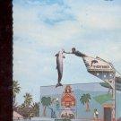 """Trace Teriffic"" Leaps for Joy - Galveston, Texas     Postcard  (# 781)"