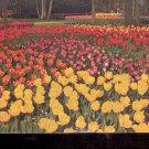 Dutch Gardens, Direct Holland Bulb Sales       Postcard  (# 793)