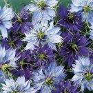 KIMIZA - 50+ NIGELLA LOVE IN THE MIST MIX FLOWER SEEDS / LONG LASTING RESEEDING ANNUAL