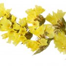 KIMIZA - 50+ YELLOW STATICE FLOWER SEEDS / LONG LASTING ANNUAL / GREAT GIFT