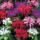 KIMIZA - 50+ MONARDA PANORAMA MIX BEE BALM FLOWER SEEDS /DEER RESISTANT PERENNIAL